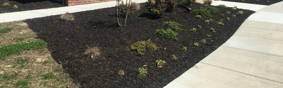 Chesapeake, VA Landscaping and Lawn Care – Coastal Edge Landscaping